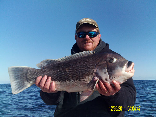 Adam bomb togging 1 19 good bite on nice fish today for Is today a good day to go fishing