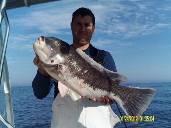 Policies for Adam bomb fishing
